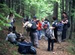 Počitek v gozdu - potrebno se je oddahniti