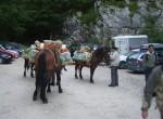 Jutro na planini Blato, tole na konjih so naročili drugi