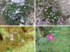 Gorsko cvetje prvič