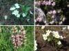 Gorsko cvetje drugič: