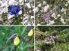 Gorsko cvetje tretjič: