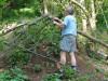 Odstranjevanje podrtega drevja.