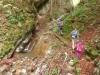 Potka se je spremenila v stezico, ob kateri je bilo vse več    slapov in slapičev.