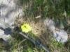 Opazujemo naravo, tudi potonke so bile drugje ob poti