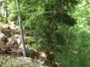 Na drugo stran je kar strmo, nekje odrezano za kar nekaj  metrov.